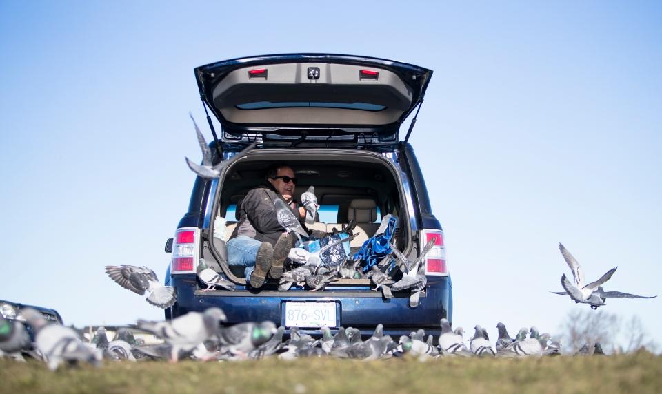 Ron McBride Pigeon