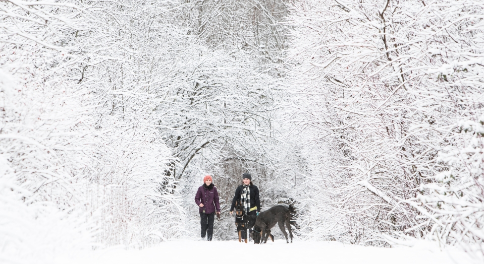 2 Elk_Lake_victoria_dog_walk_snow_winter_Kevin_Light_Photo_23